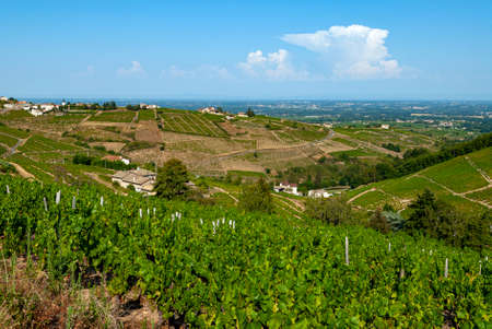 Beaujolais vineyard landscape in the Rhône department in summer around the village of Chiroubles