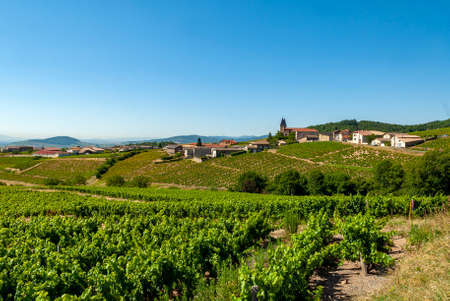 Beaujolais vineyard landscape in the Rhône department in summer around the village of Saint-Joseph-en-Beaujolais