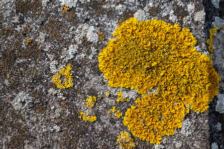 Close up of lichen growing on a concrete surface
