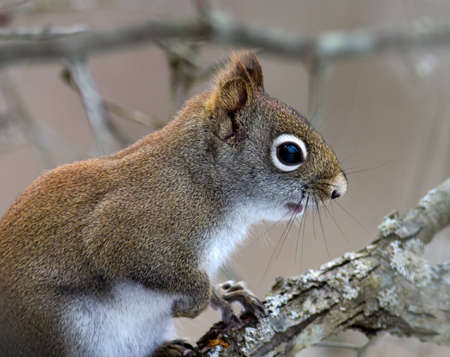 Baby squirrel pausing for a portrait.