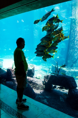 aquarium visit: Man looking in awe at a school of fish, while the entire school of fish stays still, in turn watching the man.