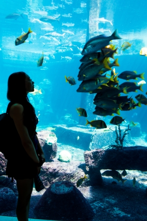 aquarium visit: Girl looking in awe at a school of fish, while the entire school of fish stays still, in turn watching the girl. Gives a feeling of awe inspired by investigating the natural world. Girl could be on a field trip to an aquarium, learning to interact and und Editorial