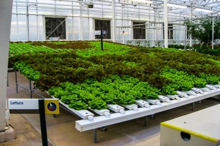 new age: New Age Hydroponic Farming.