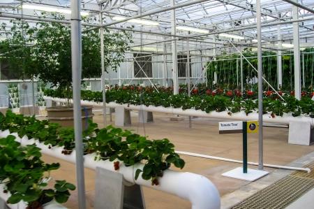 new age: Nueva Era agricultura hidrop�nica. Foto de archivo