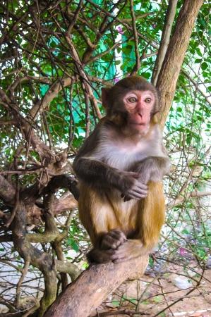 Monkey sitting on tree.