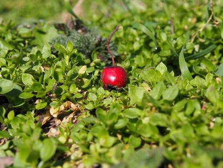 berry: Berry macro