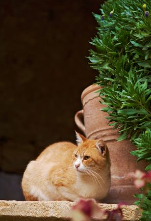 Red lazy cat with a terracotta vase at background Stock Photo