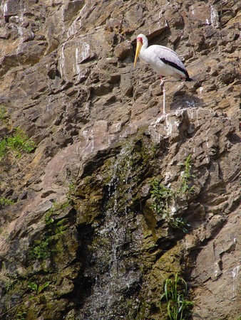 Alone white storks at the rock near waterfall