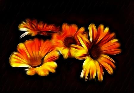 calendula: Abstract orange fractal calendula  flower wallpaper black background