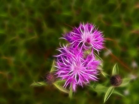 Abstract fractal flower of cornflower wallpaper on green background Stock Photo