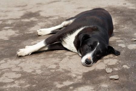 black adn white lazy dog dreams at the street
