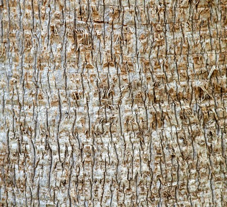 Old Palm Tree Bark Texture photo