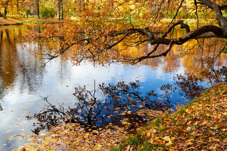 autumn landscape with yellow leaf branch reflection in lake Stock Photo