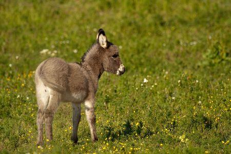grosse fesse: B�b� donkey Banque d'images