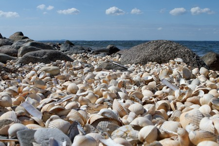 White mussels on the beach