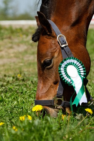 Pony with green rosette