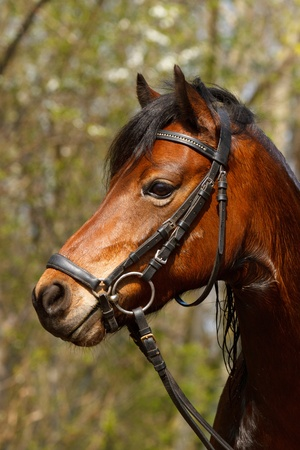 Welsh Pony after shower Archivio Fotografico