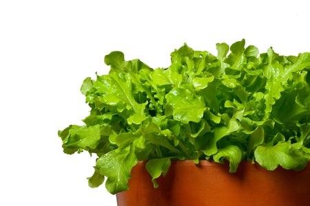 Salat in terracotta bowl Standard-Bild