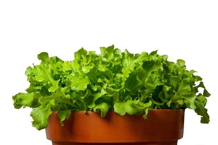 Salat in terracotta bowl Archivio Fotografico