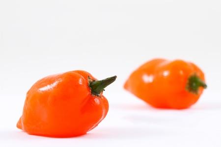Two orange habanero chilies on white