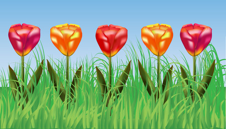 Five bright blossoming tulips in the grass