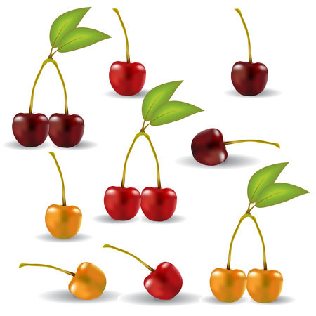 cuttings: A set of realistic cherries with cuttings and leaves. Berries, one by one, are grouped by two Illustration