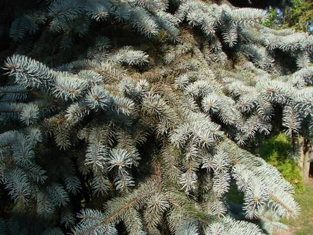 자연 오래 된 크리스마스 트리 나무 질감 패턴 또는 텍스트 또는 이미지 복사 공간 디자인을위한 크리스마스 트리 배경. 근접 크리스마스 트리 빈티지 스톡 콘텐츠