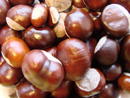 Horse chestnut, close-up, brown background. Natural fruit background, macrophoto