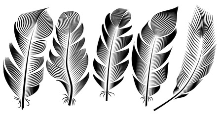 Collection of feather illustration, drawing, engraving, ink, line art, Stock Illustratie