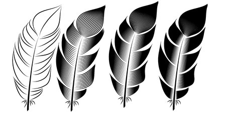 Collection of feather illustration, drawing, engraving, ink, line art, Illustration