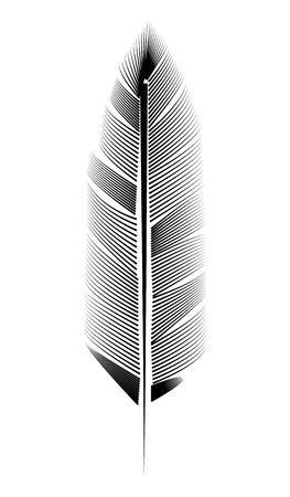 feather illustration, drawing, engraving, ink line art  イラスト・ベクター素材