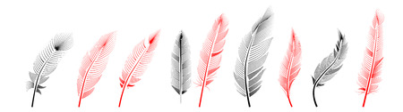 Collection of feather illustration, drawing, engraving, ink line art