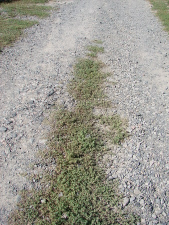lonely, gravel macadam footpath with grass on either side Imagens