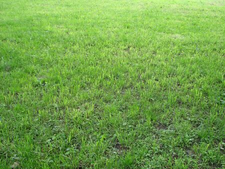 Cut strip of green grass. Mowing the lawn. focus