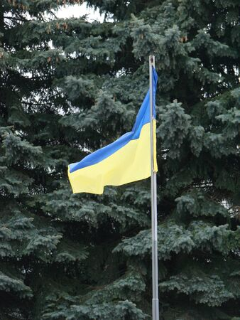 Yellow-blue flag of Ukraine on the background of fir branches 写真素材