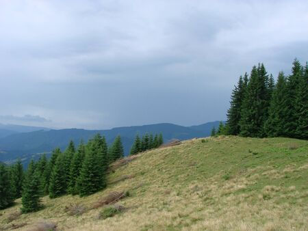 Beautiful mountain landscape - panoramic view of the Carpathian Mountains, shows how far the cows graze. Summer photo of mountain Carpathians. Horizontal