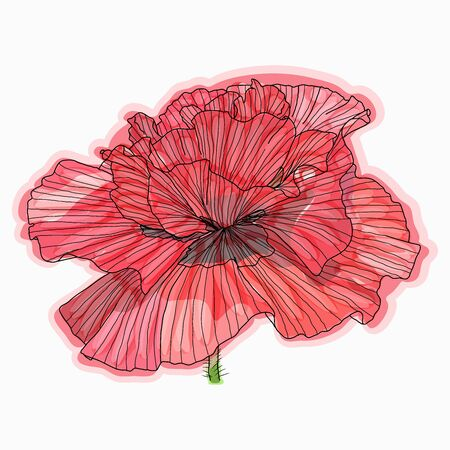 Ink, pencil, watercolor poppy flower sketch. Line art background. Hand drawn nature painting.