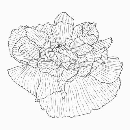 Handgezeichnete kalifornische Mohnblumen und Skizze mit Strichzeichnungen auf weißem Hintergrund.