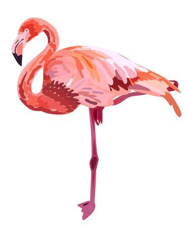 Pink flamingo illustration isolated on white background
