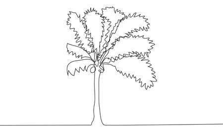 Continuous line drawing of coconut trees, nature concept, summer illustration