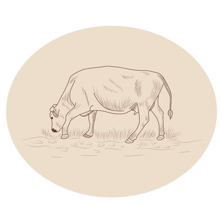 Cow, Hand drawn in a graphic style. Vintage engraving illustration for poster, web Ilustração