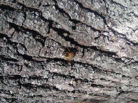 bee tree - bees (apis mellifera) living in tree Banco de Imagens