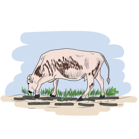 Cow, Hand drawn in a graphic style. Vintage engraving illustration for poster, web. Isolated 矢量图像