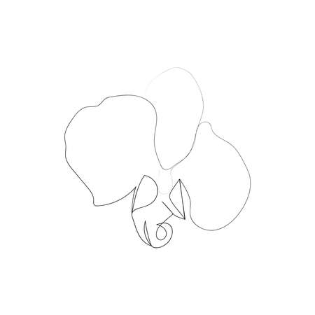continuous line drawing of beautiful flower Orchid