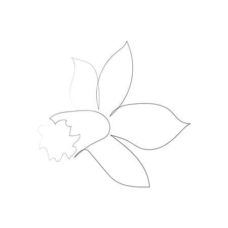 continuous line drawing of beautiful flower Narcissus