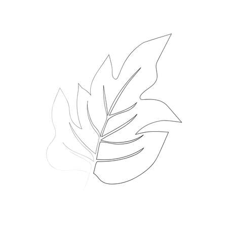 continuous line drawing of beautiful flower monstera leaf