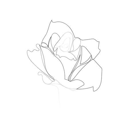 continuous line drawing of beautiful flower rose