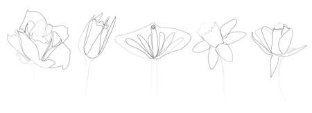 continuous line drawing of beautiful flower Calla, monstera leaf, rose, daffodil, water lily, orchid