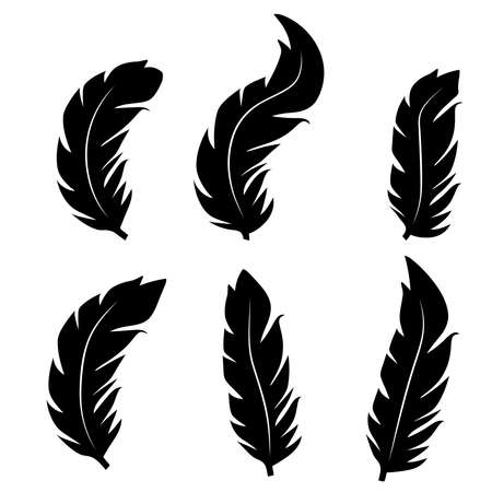Collection of feather illustration, drawing, engraving, ink line art.