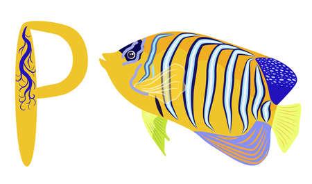 ABC kids letter. Emperor angelfish Pomacanthus imperator on white, sea animal wildlife character. Nature underwater, marine wild ocean zoo fish.